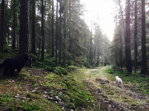 Forest near Ise, Norway